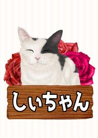 Shiityan real Cat Name Theme