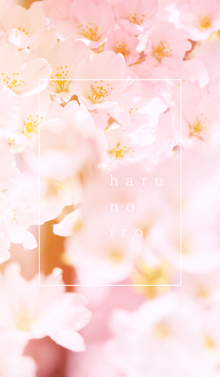 Spring colors & cherry blossoms