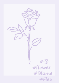 #flower rose(purple2)
