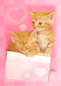 Lucky cat that leads love luck