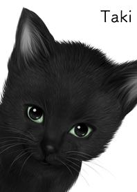 Taki Cute black cat kitten