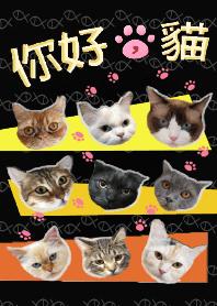 你好,猫 - 全員大集合 _ 極致黑