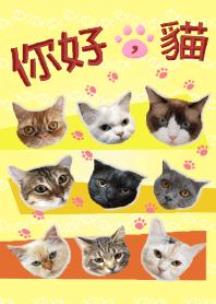 你好,猫 - 全員大集合 _ 清新黃