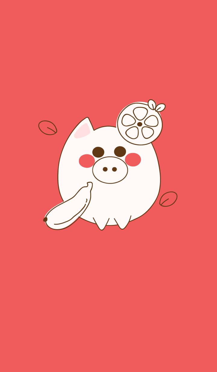 baby pig 46