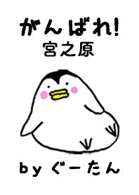 MIYANOHARA g.no.8484