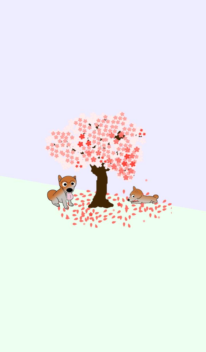 桜の木と柴犬(Shiba dog)