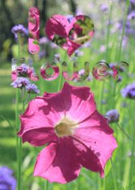ธีมดอกไม้หลากสี