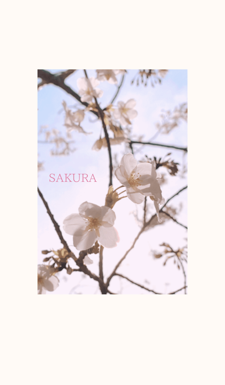 -- Cherry Blossoms -- 2020 - 15 -
