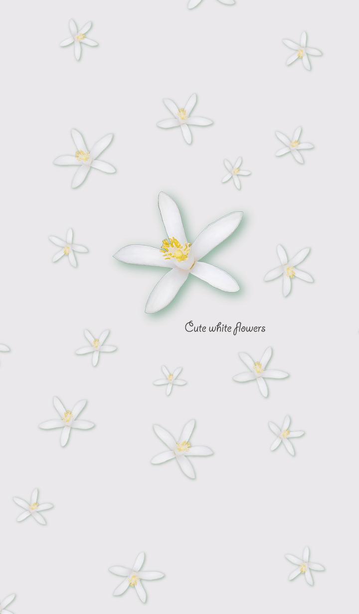 Cute white flowers*