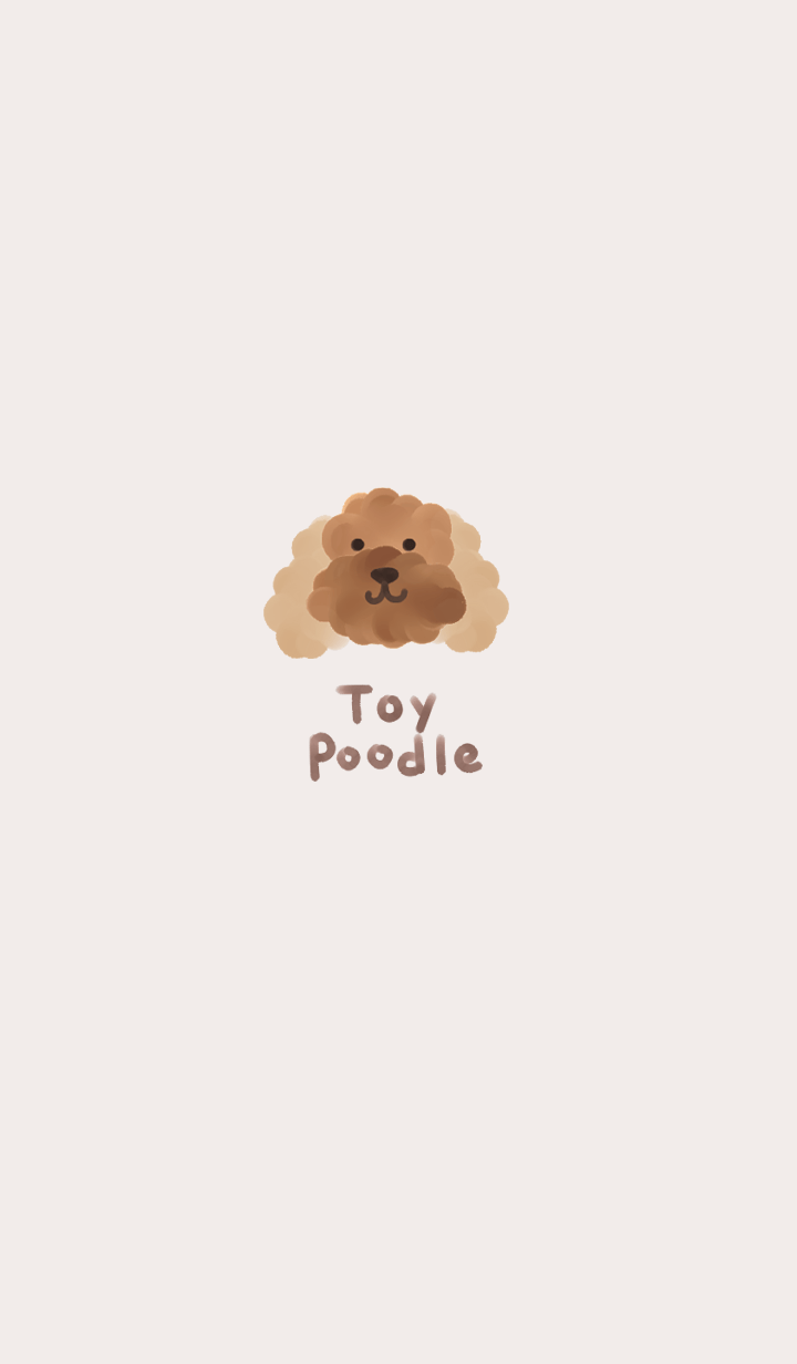 toy poodle.1.