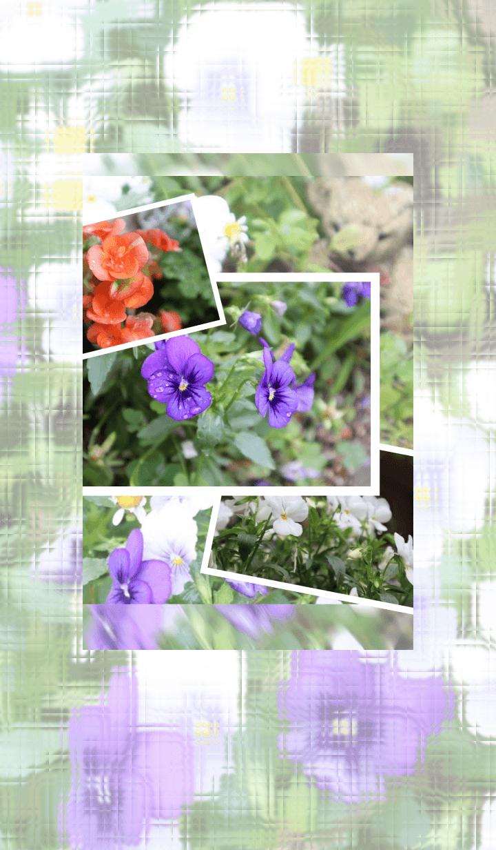 Rainy season flower 01
