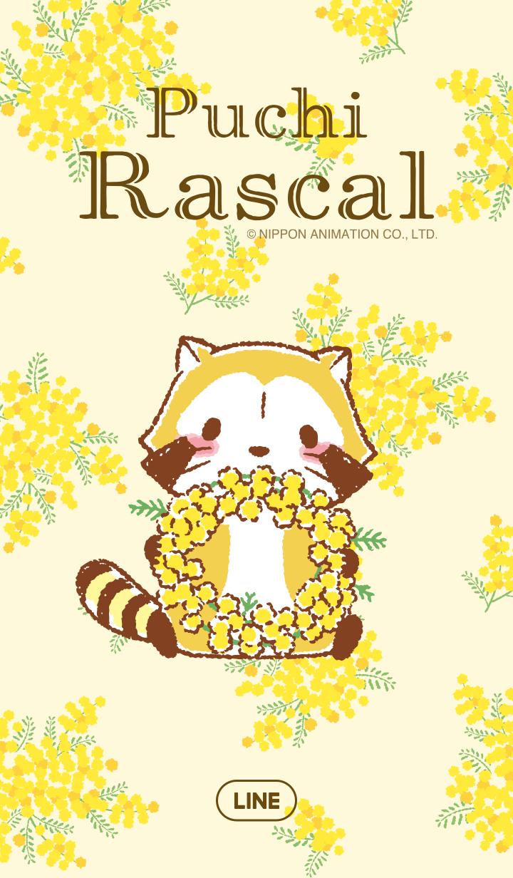 Rascal☆Mimosa
