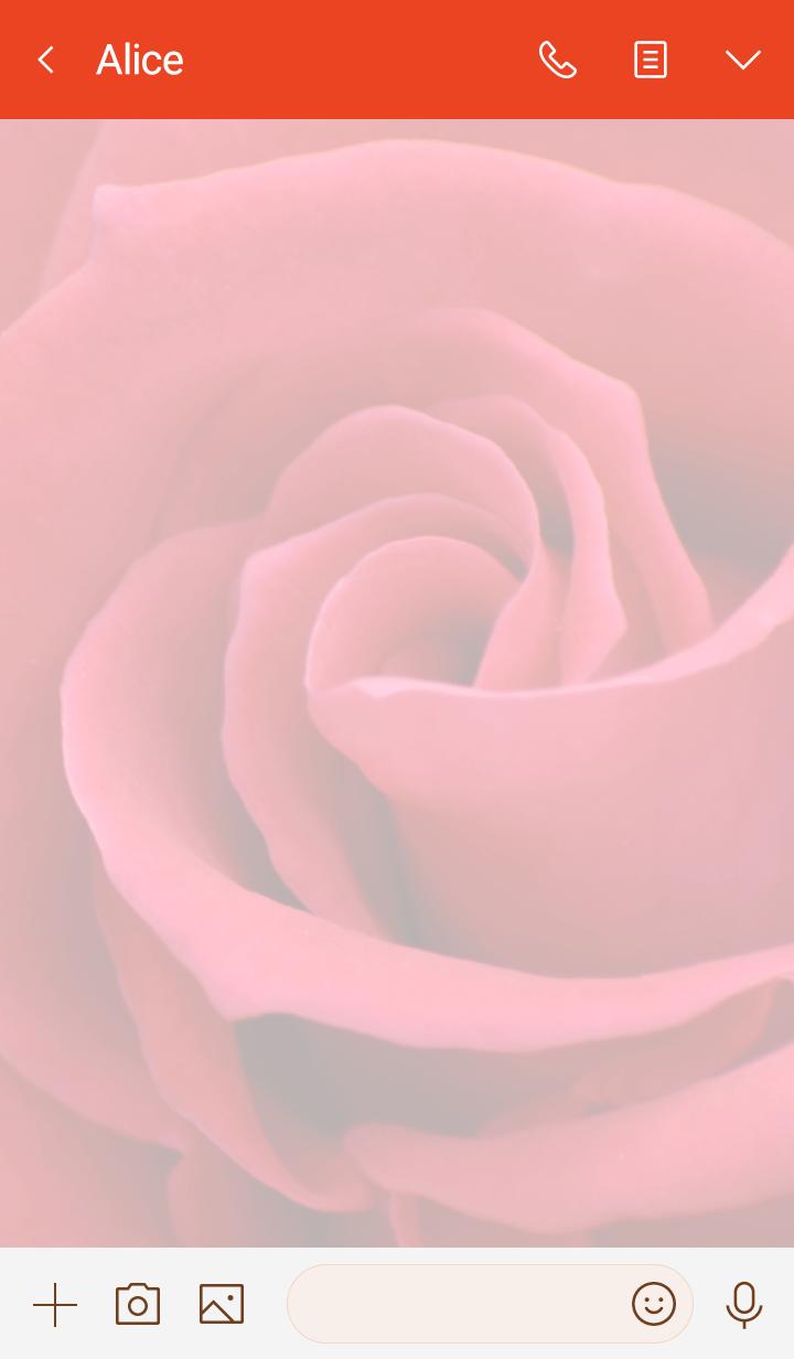 Rose Theme 24