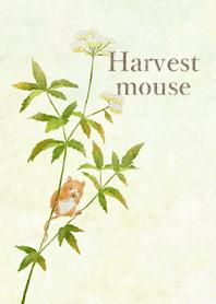 Harvest mouse illustration