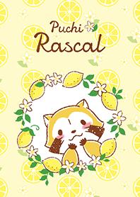 小浣熊☆檸檬