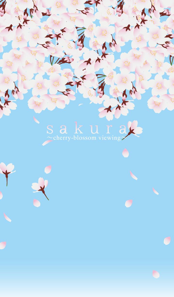 sakura(花見)