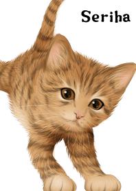 Seriha Cute Tiger cat kitten