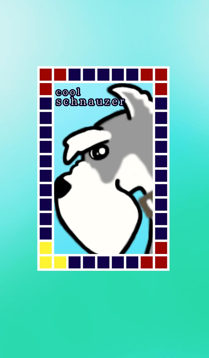 cool schnauzer dog 6