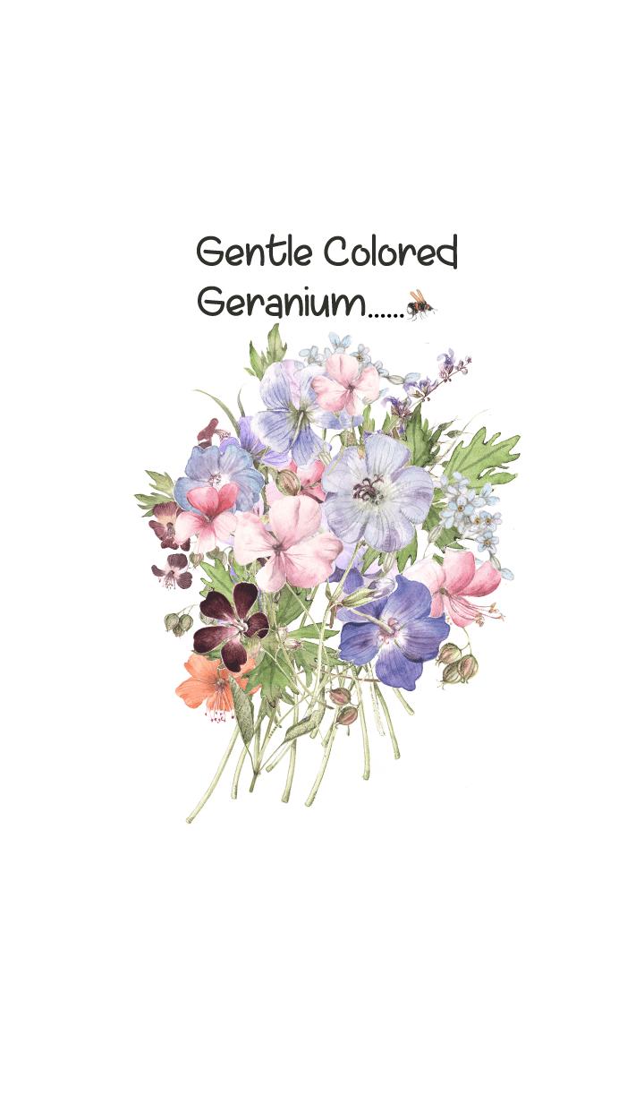 gentle colored geranium