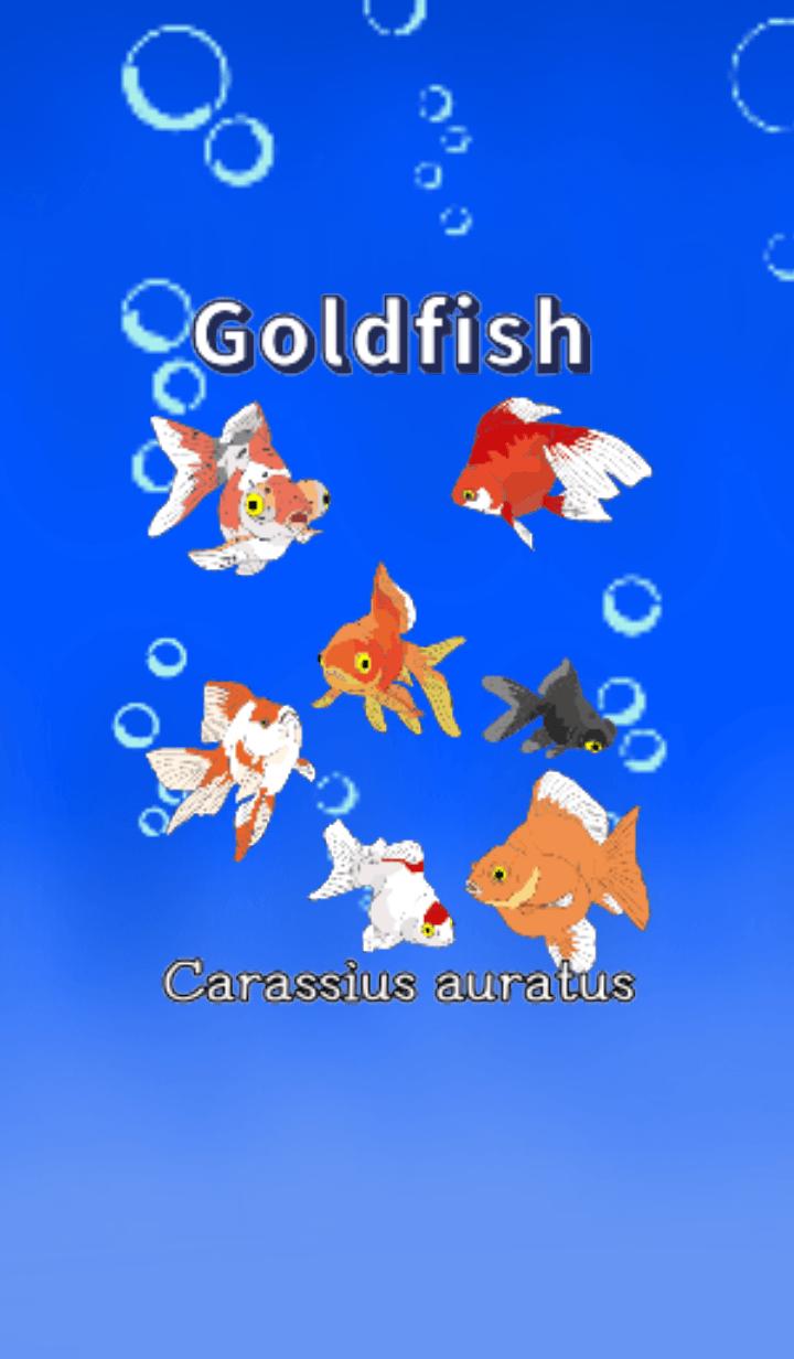 Goldfish Goldfish Goldfish