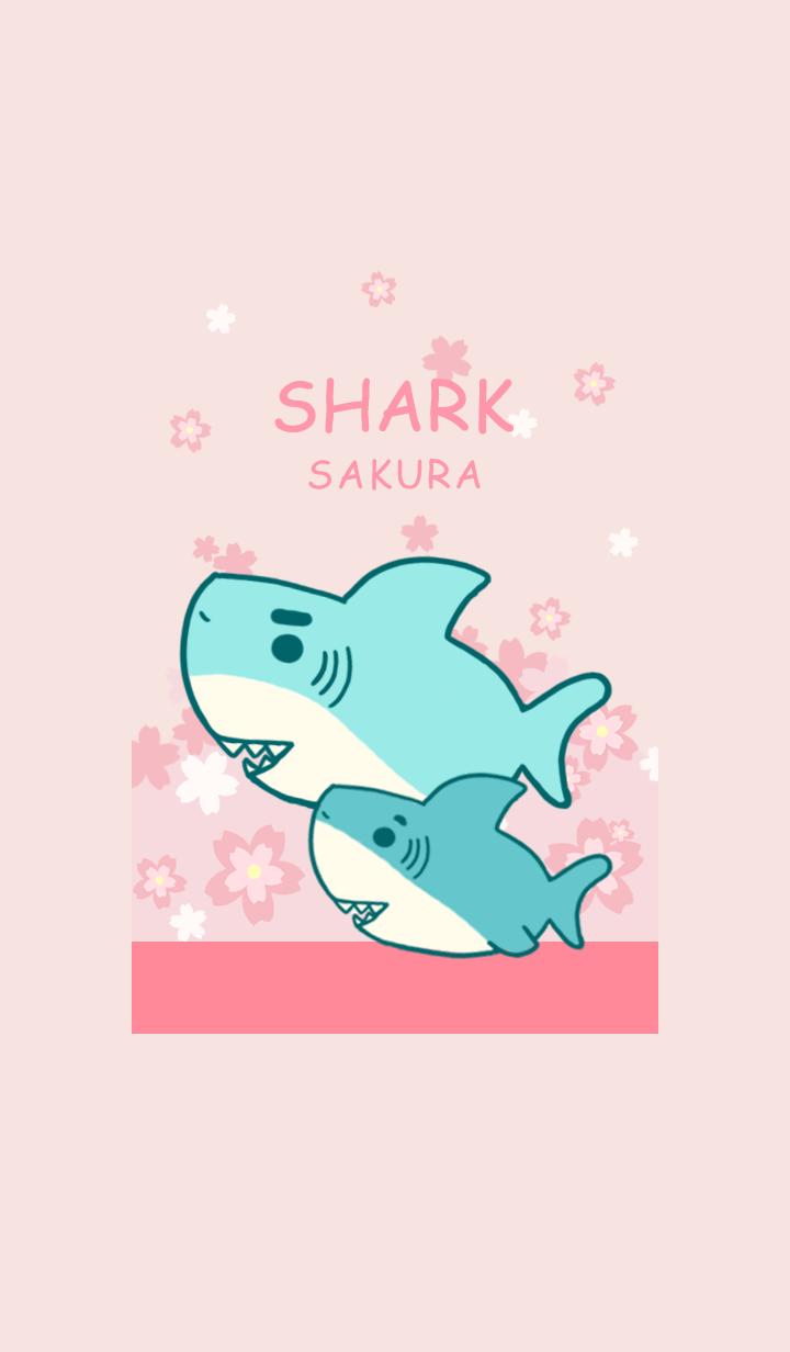 misty cat-sakura shark