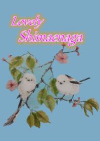 Lovely Shimaenaga