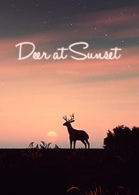 Deer at Sunset .