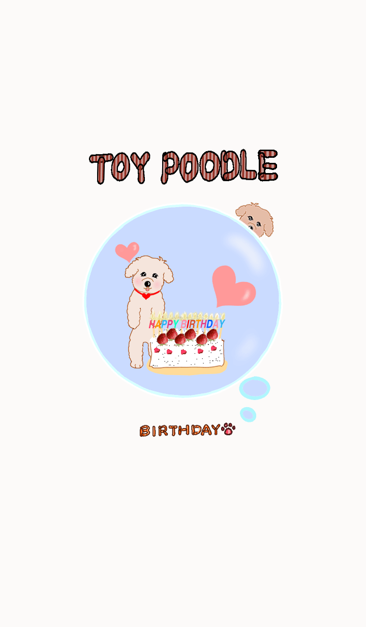 Hareruki of happy toy poodle birthday2