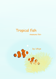 Tropical fish -Anemone fish-