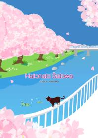 櫻花和貓[春天]