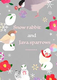กระต่ายหิมะและนกกระจอก Java