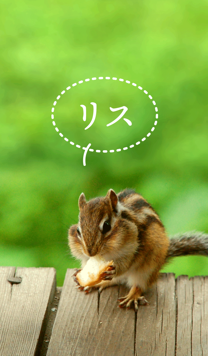 Funny and cute squirrel [jp]