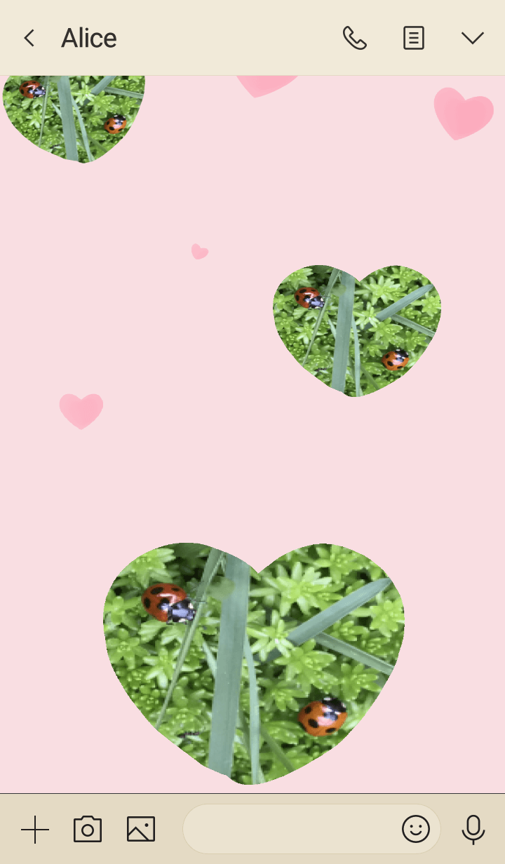 Hareruki of seven spoted ladybird2