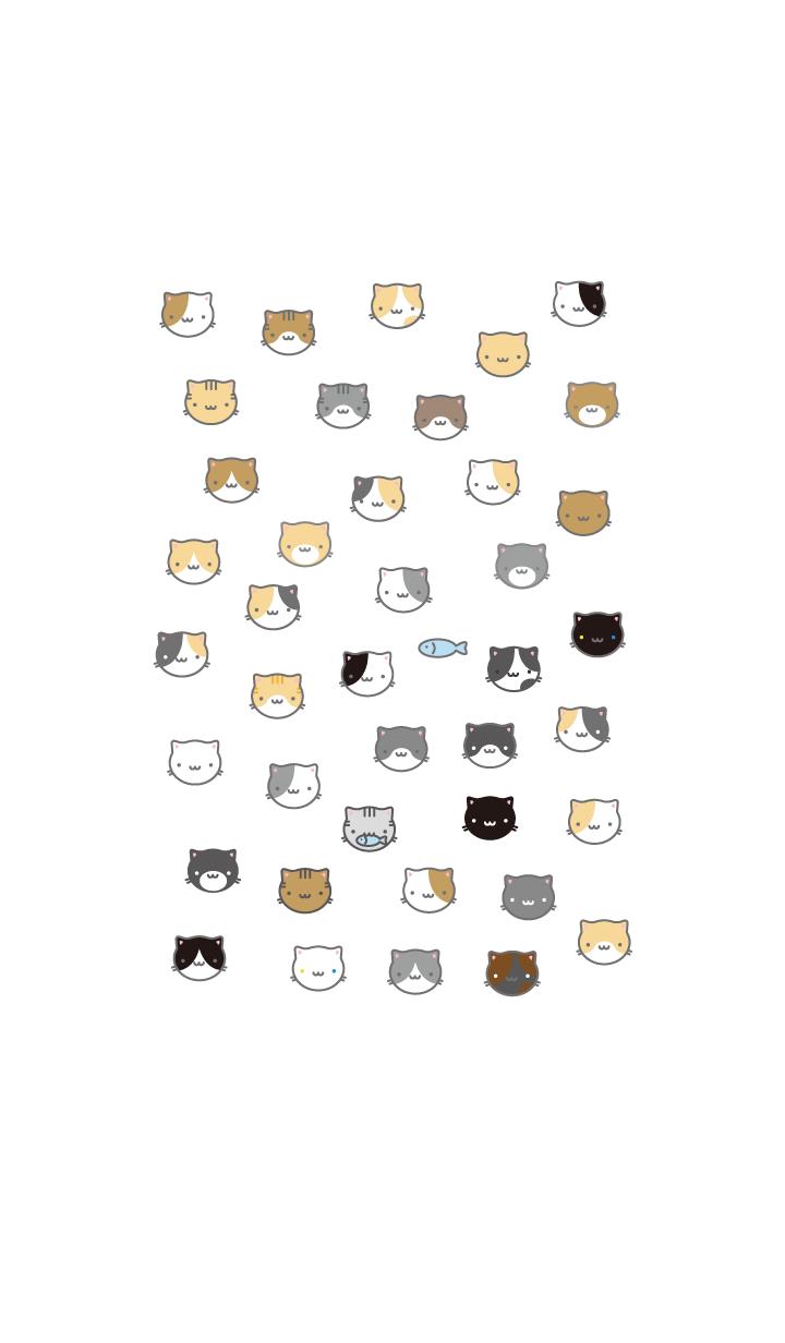 ชุดรูปแบบต่าง ๆ ของแมว
