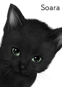Soara Cute black cat kitten