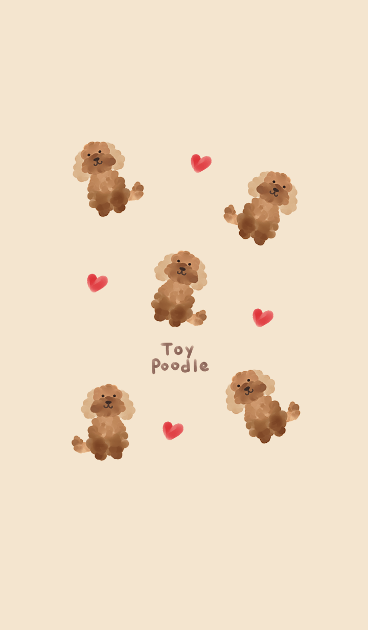 toy poodle.4.