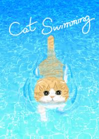 Cat Swimming : Scottish Fold :E