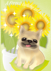 A French bulldog and sunflowers again