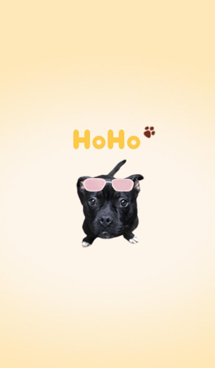 AMERICAN BULLY Dog HOHO