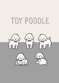 Doodle white toy poodle
