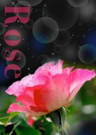BLACK ROSE GARDEN from JAPAN
