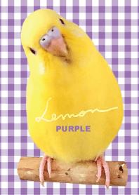 budgerigar Lemon
