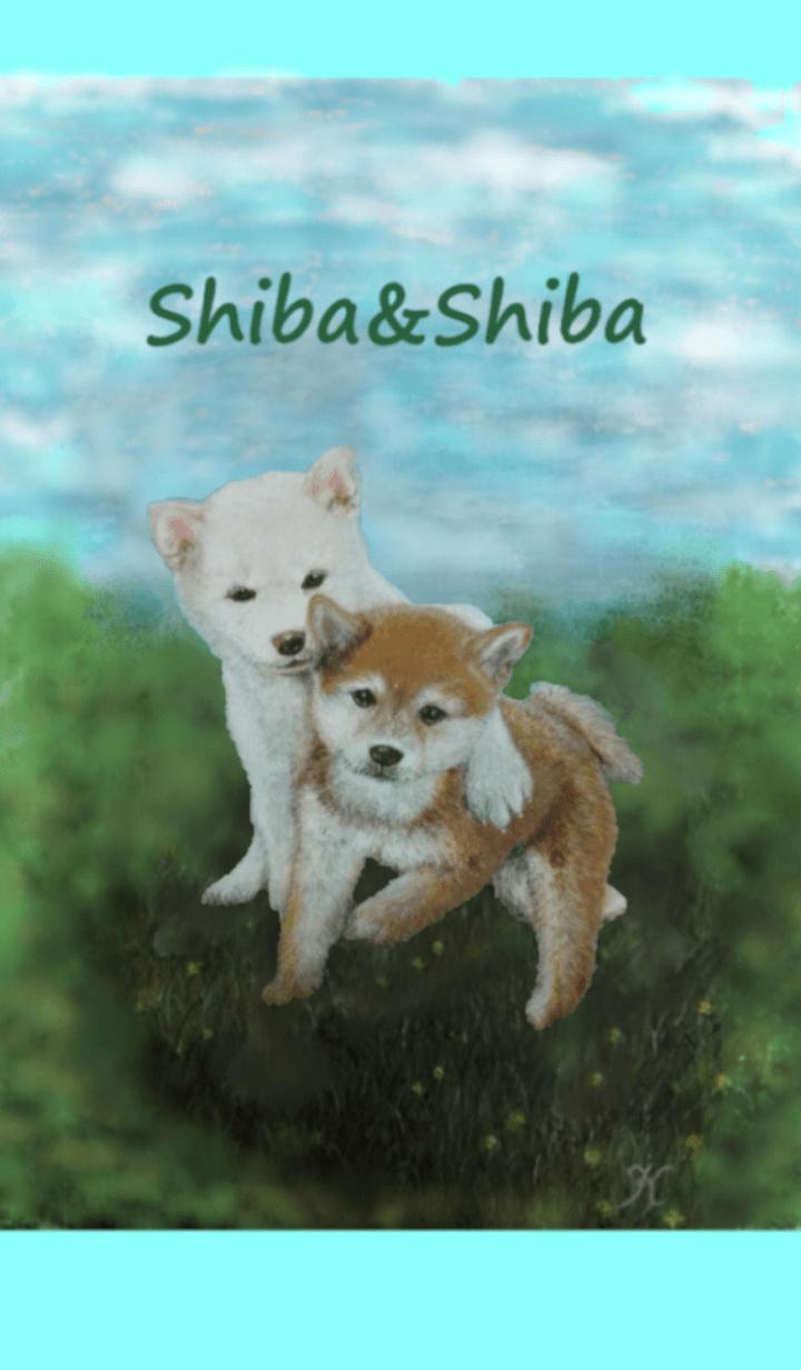 Shiba&Shiba