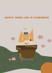開花的快樂柴犬