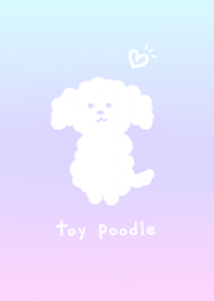 Cute toy poodle1.