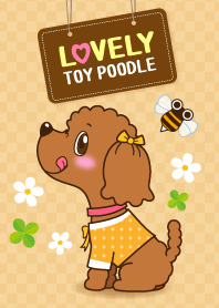 Lovely! Toy poodle