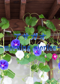 morning glories ver.2