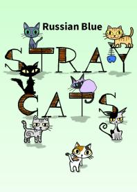 STRAY CATS -Russian Blue-