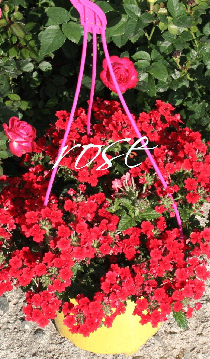 red flower!