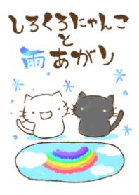 white cat and black cat16